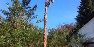 Ben's Wood Sprl - Abattage/Elagage